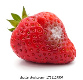 One rotten strawberry isolated on a white background.