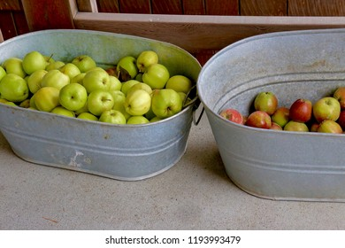 One rustic galvanized bucket with freshly picked green apples and another galvanized bucket with freshly picked red apples.