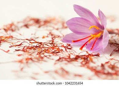 one saffron flower and a lot of drying stigma