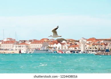 One seagull flying above the wavy sea on a sunny day in Vodice, Croatia