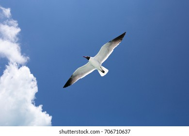 One seagull on blue sky background
