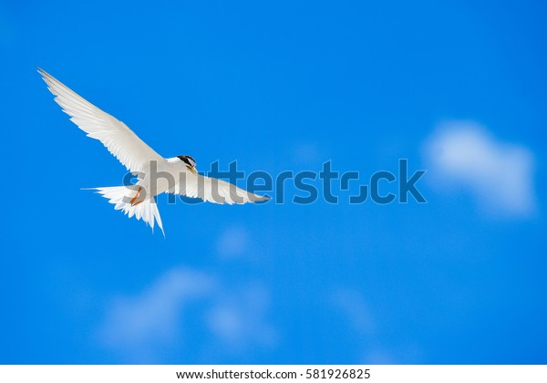 One seagull sky  .  Seagull flying on clear blue sky and sun light