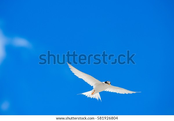 One seagull sky  .  a group of flying seagull birds with one individual bird going in the opposite direction with blue sky background.