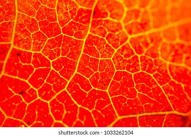 One separate dry leaf  of Autumn times in macro view