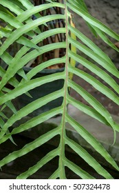 One separate green leaf  of spring season