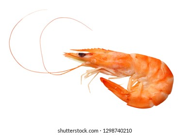 one shrimp isolated on a white background. top view