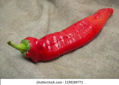 One single hot red pepper lies on sackcloth