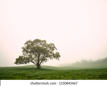 One Single Lonely Tree in a Foggy Farm Field in the Morning Haze and Mist