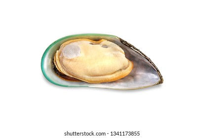 One single raw New Zealand mussel on shell isolated on white background