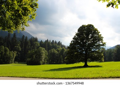 One single tree standing on a grassfield with more trees in the background an dark clowd looming at far distance