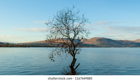 One single tree without leaves in Autumn sunny day growing in a Scottish loch with highlands landscape in the background (Loch Lomond, Scotland , UK)