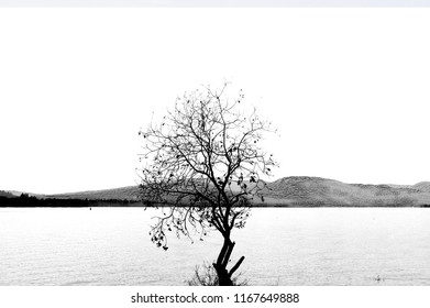 One single tree without leaves in Autumn sunny day with lake and Scottish highlands landscape in the background. Black and White.