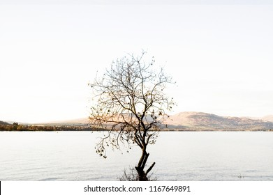 One single tree without leaves in Autumn sunny day with lake and Scottish highlands landscape in the background