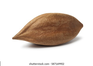 One single unshelled pili nut from the Philippines on white background