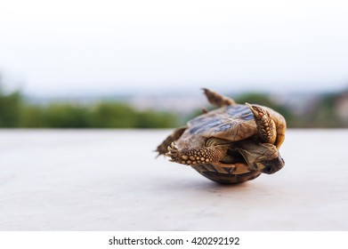 one small green turtle that lose balance