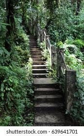 One of the Stairway inside El Yunque (National Rainforest), Rio Grande, Puerto Rico.