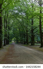 One of the stately driveways with tall trees at Soestdijk Palace, Netherlands