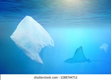 One stingray swimming near huge plastic bag in the open sea