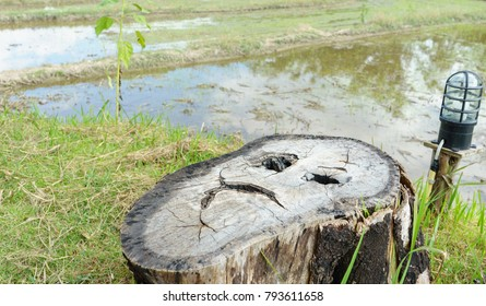 One strange face on the tree stump. copy space.