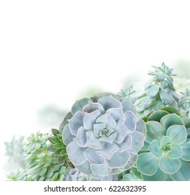 One succulent green plants border isolated on white background
