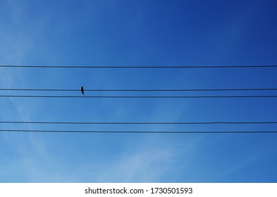 one swallow sits on a wire and five transmission lines against a bare sky with haze of clouds