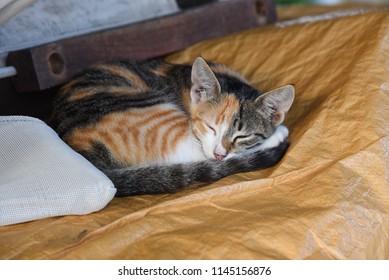 One tabby ginger kitten curled up asleep - Shutterstock ID 1145156876