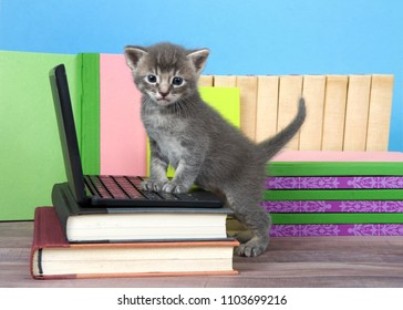 One tiny grey and cream tabby kitten standing with front paws on a miniature laptop computer looking at viewer. Books stacked around, wood floor, blue wall background.