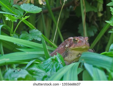 one toad surrounded by greenery