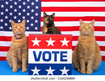 One tortoiseshell cat sitting behind a podium with VOTE sign on the front, orange tabby cat sitting on each side, all looking directly at viewer. Voting election theme. Copy space