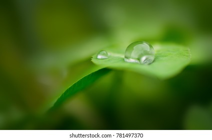 one transparent water Drops on a green leaf, macro and closeup photo, the drop is sharp and on the right side, the background is green and blur