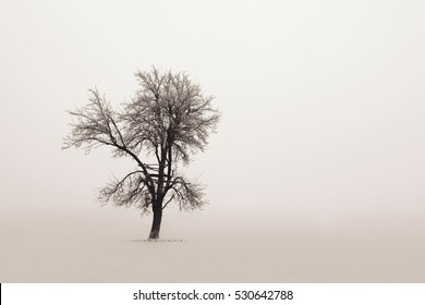 One tree in autumn morning fog