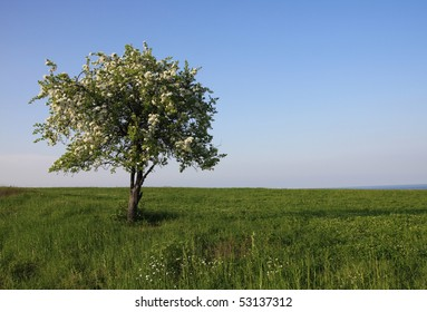 One tree in the green meadow.