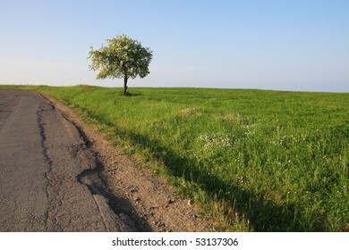 One tree on the edge of the old asphalt road.