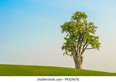 one tree on grass field in blue sky