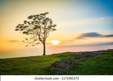 One tree on slope hill mountain and beautiful sunrise with tree alone and sun sky yellow blue background