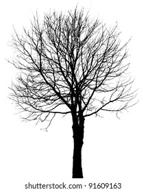 one tree silhouette isolated on white