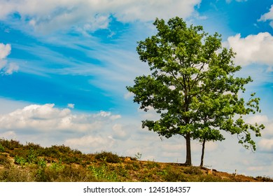 One tree standing on a hill