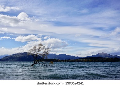 One tree stands in Lake Wanaka, surrounded by water and snowy mountains in Wanaka, South Island, New Zealand.