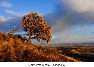 one tree in top of the hill in autumn