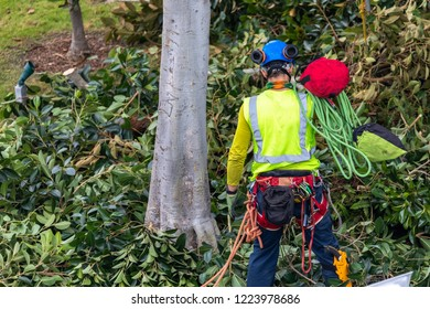 One tree trimmer with gear preparing to climb