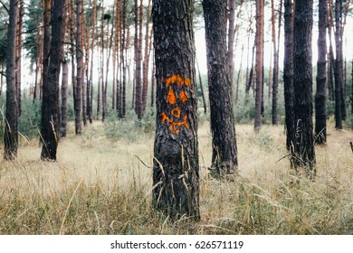 One trunk of many coniferous trees in woods with painted face(smiley) on surface. Face is painted with orange spray paint. Grassy ground of yellow color, in background rest of the forest out of focus.