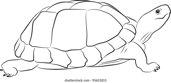 one turtle sketch - freehand on a white background