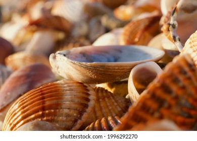 One upturned shell faces the sky like a cup. Balanced perfectly on a pot porri of other wet ridged shells in warm, neutral colours. There is a blue glow inside it reflecting a perfect sky at dawn.