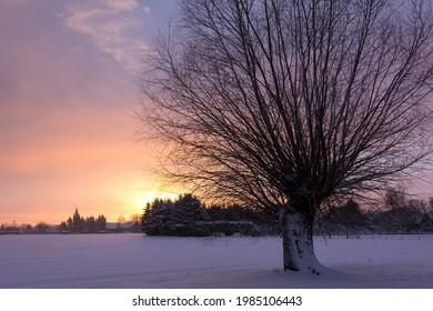Ein sehr schöner Weidenbaum steht am Rande eines Feldes. Das Licht der Morgensonne fällt auf die Bäume. Es gibt Schnee und es ist sehr kalt. Im Altmark, Sachsen-Anhalt gesehen.