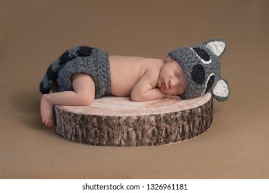 One week old newborn baby boy wearing a crocheted raccoon costume. He is sleeping on a little tree stump.