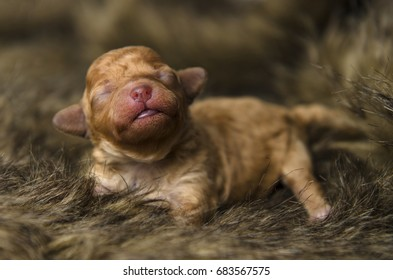 One week old puppy who'd eyes have not opened yet trying to make sense of the world. It would just like a drink with its little pink nose.
