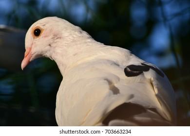 one White bird