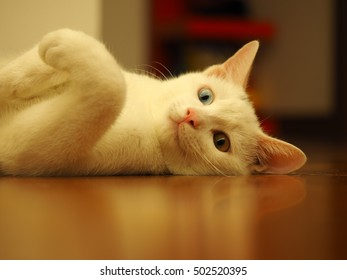 One white cat with all kinds of cute poses