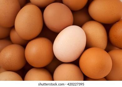 One white egg among brown eggs