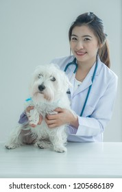 One woman with white coat and stethoscope white background with one dog, veterinary and pet hospital concept.